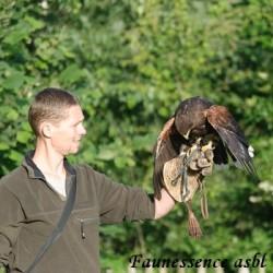 Stage d'apprentissage de la fauconnerie